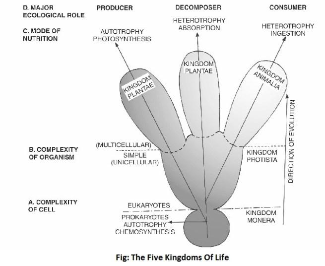 kingdom of life diagram - Five-Kingdom System of Classification