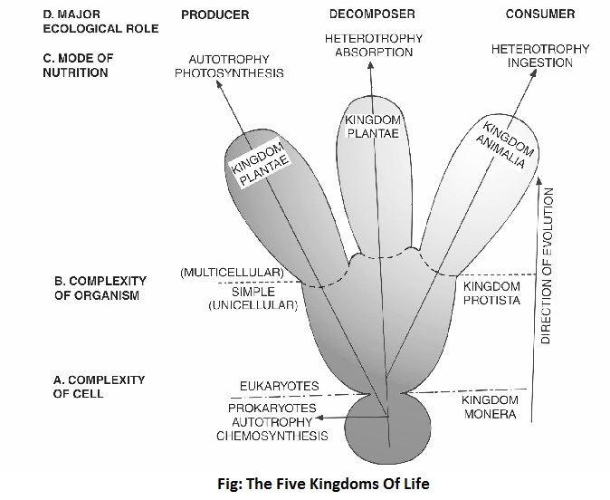 kingdom of life diagram - Five-Kingdom System of Classification