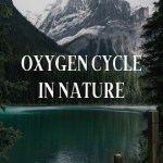 oxygen cycle in environment