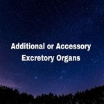 Additional or Accessory Excretory Organs
