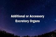 Accessory Excretory Organs