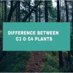 Difference Between C3 Plants And C4 Plants