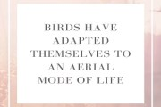 Explain how birds have adapted themselves to an aerial mode of life?
