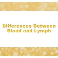 State the differences between Blood and Lymph