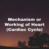 Mechanism or Working of Heart (Cardiac Cycle)