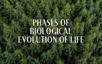 Phases of Biological Evolution of Life