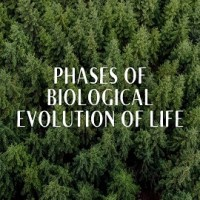Describe the phases of the biological evolution of life