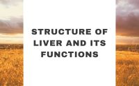 Structure Of Liver And Its Functions