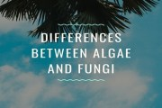 Differences Between Algae And Fungi