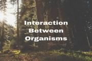 Interaction Between Organisms
