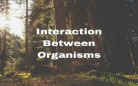 Interaction Between Organisms