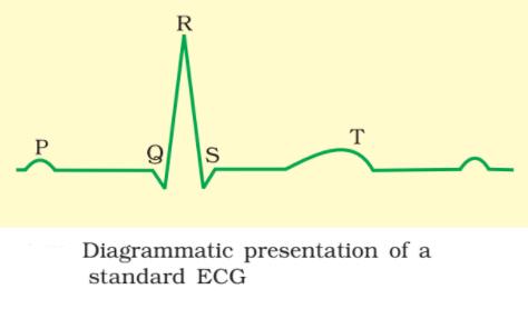electrocardiogram - Electrocardiogram & Waves Produced During Normal ECG