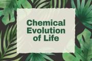 Steps of Chemical Evolution of Life