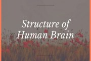 Structure of Human Brain