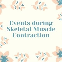 Events during Skeletal Muscle Contraction
