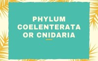 Phylum Coelenterata or Cnidaria