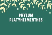 Phylum Platyhelminthes (The Flatworms)