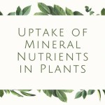 Uptake of Mineral Nutrients in Plants