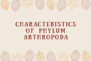 Characteristics of Phylum Arthropoda