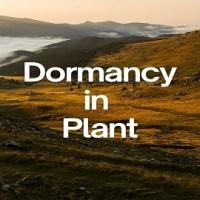 Dormancy in Plant