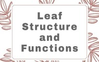 Leaf Structure and Functions