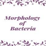 Morphology of Bacteria