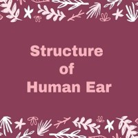 Structure of Human Ear