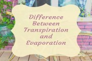 Difference Between Transpiration and Evaporation