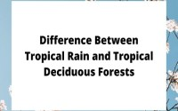 Tropical Rain and Tropical Deciduous Forests