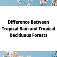 Difference Between Tropical Rain and Tropical Deciduous Forests
