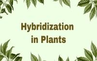 Hybridization in Plants