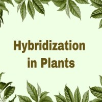 What is Hybridization? Give its uses and describe different types of hybridization in Plants.