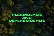 Plasmolysis and Deplasmolysis