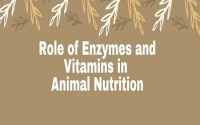 Role of Enzymes and Vitamins in Animal Nutrition