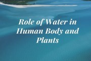 Role of Water in Human Body and Plants