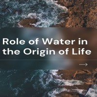 Role of Water in the Origin of Life