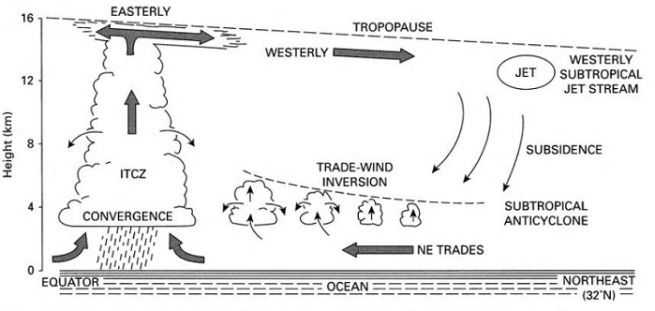 hadley cell regime - Tropical Weather and Climate