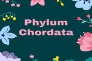 Phylum Chordata- Animals with Notochord