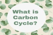 What is Carbon Cycle? Process of Carbon Cycle