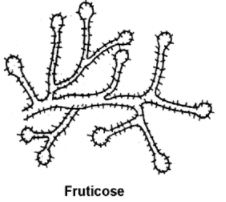 fruticose - Lichens-Occurrence, Morphology, Internal Structure and Importance