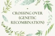 Crossing Over (Genetic Recombination)