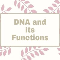 DNA and its Functions