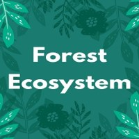 Forest Ecosystem