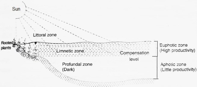ZONATION IN A POND OR LAKE ECOSYSTEM - Standing Water Ecosystems (Lakes and Ponds) i.e. Lentic Type