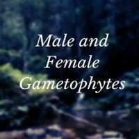 Difference Between Male and Female Gametophytes of an Angiosperm