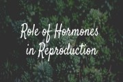 Role of Hormones in Reproduction