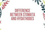 Difference Between Stomata and Hydathodes