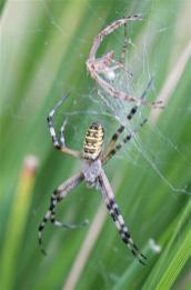 Araignées (4) (Medium)