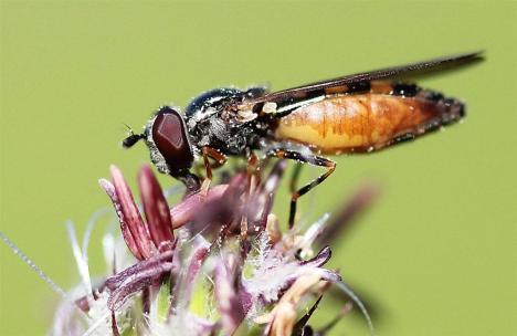 Insectes (1) (Medium)