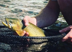 The best fishing in the Bob Marshall Wilderness